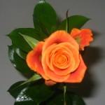 Onnittele valmistunutta! Runsas valikoima ruusuja ym.ym.